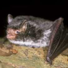 Baddesley-bat-walks-1583525710