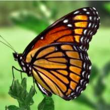 Guided-tour-butterfly-house-1552136698