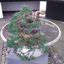 Bonsai-demonstration-1580414093