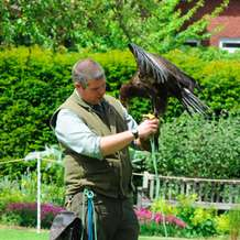 Falconry-day-1491725370