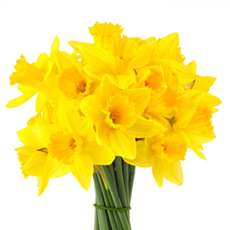 Daffodils-for-mother-s-day-1486765379