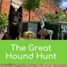 The-great-hound-hunt-1564132050