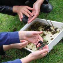 Pond-dipping-days-1554798950