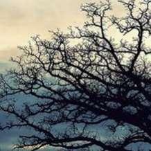Winter-tree-identification-1577470241