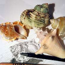 Studio-drawing-day-shells-1451860155