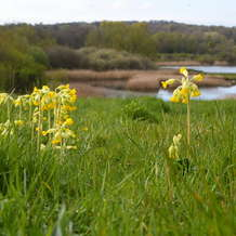 Spring-walk-at-rspb-sandwell-valley-1516283403