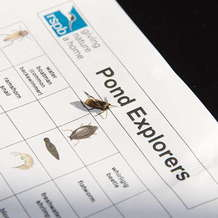 Guided-pond-dipping-at-rspb-sandwell-1527318400