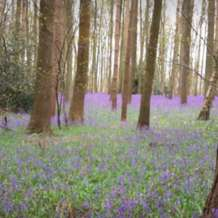 Bluebell-walk-1523910848