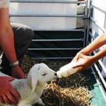 The-farm-family-day-1494009521