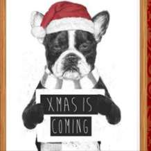 Christmas-pooch-party-1574367757