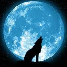 Mister-wolf-1479065560