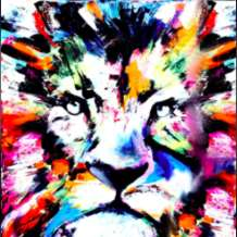 Colourful-lion-1581870290