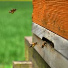 Introduction-to-beekeeping-workshop-1406409554