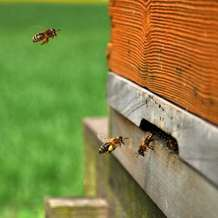 Introduction-to-beekeeping-workshop-1475523935