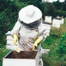 Introduction-to-beekeeping-1523626603