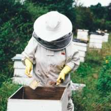 Introduction-to-beekeeping-1550058097